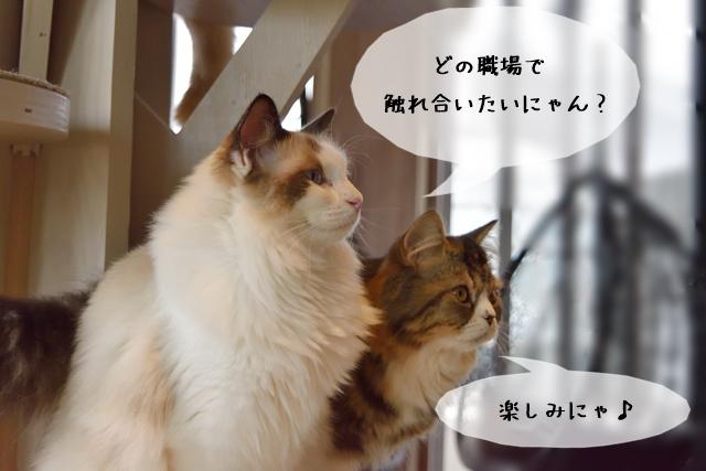 【猫の仕事】どんな職場