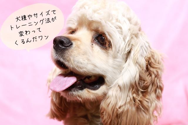 ドッグトレーナーが見る中型犬
