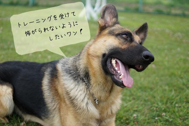 ドッグトレーナーが見る大型犬