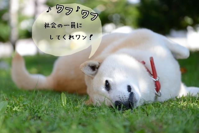 犬を社会に適応させるための訓練:社会化トレーニング