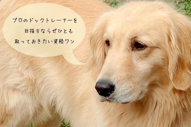 犬の訓練士の資格【JKC(ジャパン ケネル クラブ)】