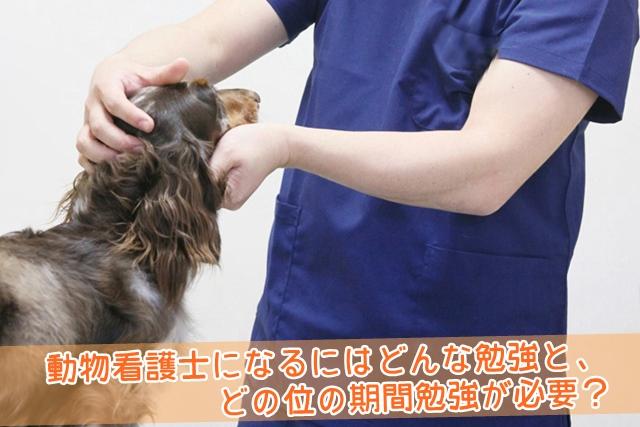 動物看護士になるにはどんな勉強と、どの位の期間勉強が必要?