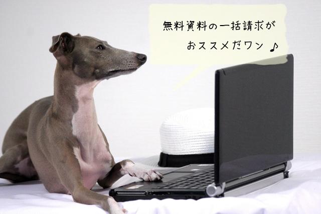 犬に関する資格を取るなら無料資料請求を活用すべき!