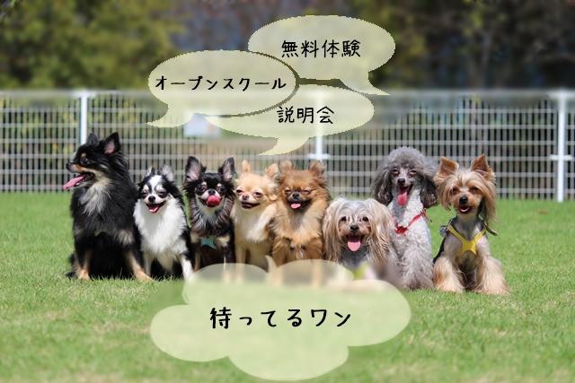 犬関連資格スクールの無料体験!説明会などの活用メリット
