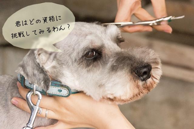 犬関連の職場で働く実際のプロはどんな資格を持っているの?