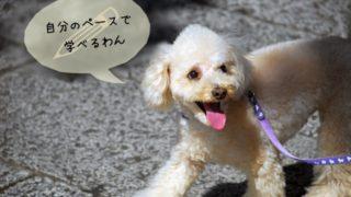 犬関連の資格なら通信講座が最適!通信講座のメリット