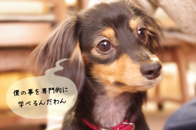 犬関連の専門学校(スクール)の特徴と進学するメリット