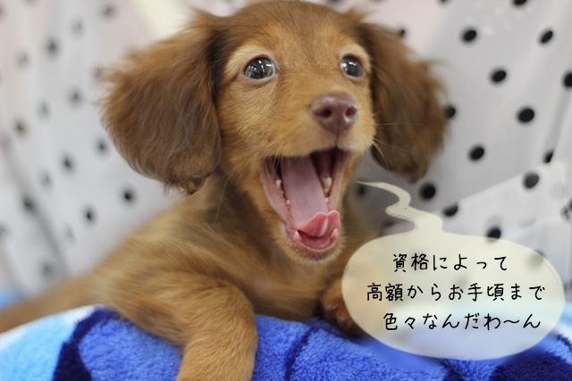 犬関連の仕事に必要な資格を取得するまでの期間や費用