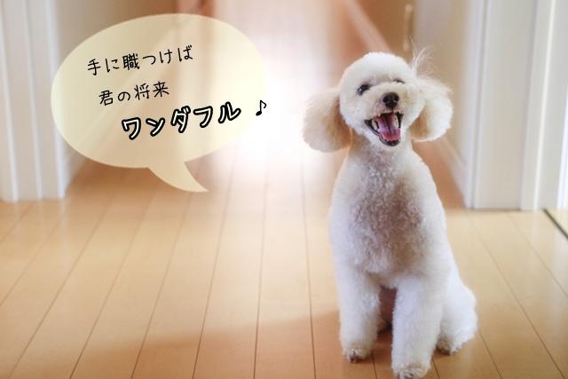 犬関連のお仕事は「手に職をつけられる」?メリットやおススメの資格