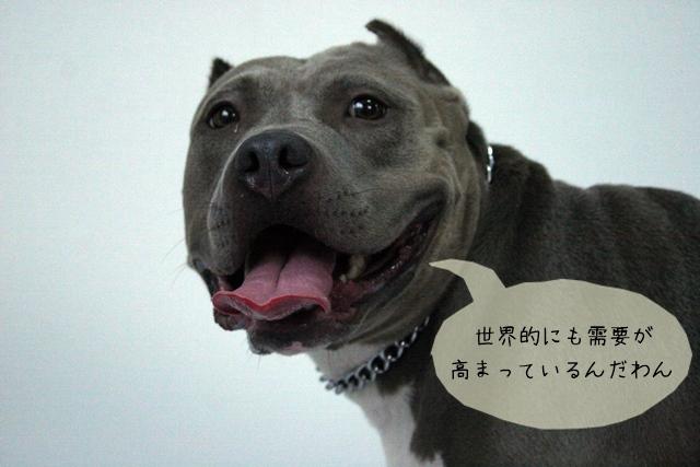 犬関連の資格や経験は将来必ず役に立つ!どんな事が期待できる?