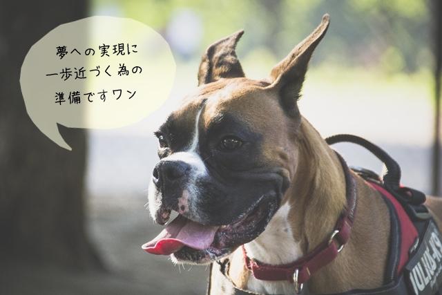 将来は犬に関わる仕事に就きたい!学生なら今のうちに準備しておきたい事!