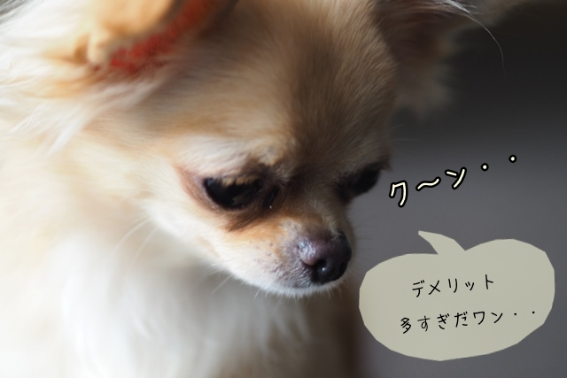 犬関連の職業は独学でもなれる?メリットよりもデメリットが多い独学の難しさ