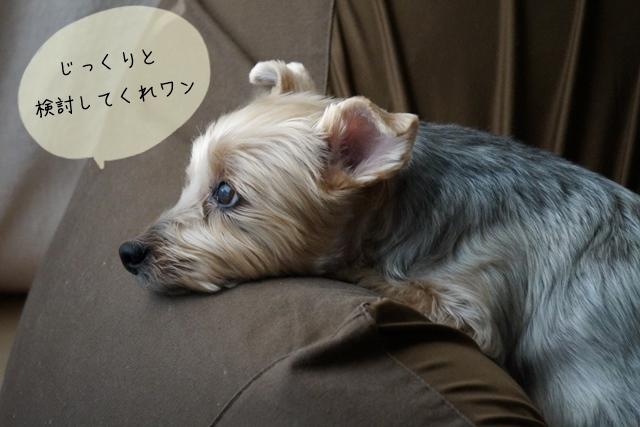 犬関連の知識を学ぶ!独学・通信・大学それぞれにかかる勉強費用ってどれくらい?