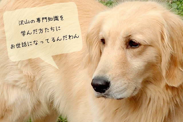犬関連の仕事に就くにはどんな勉強?どの位の期間が必要?