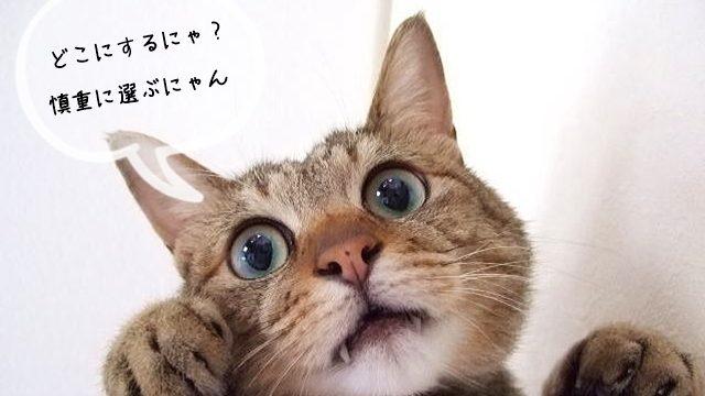 猫の資格取得!ペット専門学校やスクールの探し方
