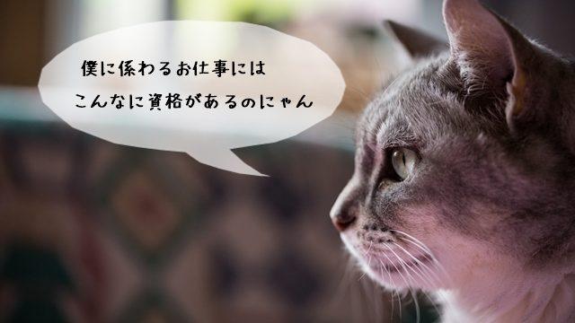 猫の資格!猫関連の仕事に必要な資格を解説