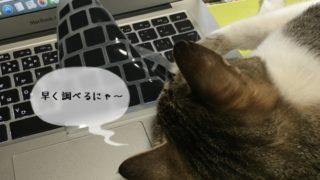猫の仕事に求人応募する予定の方必見!
