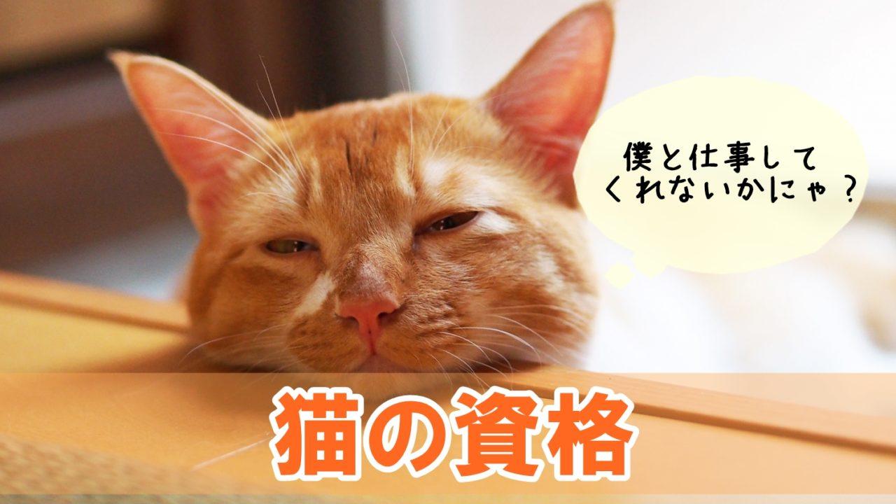 猫関連の仕事に就く方法と資格