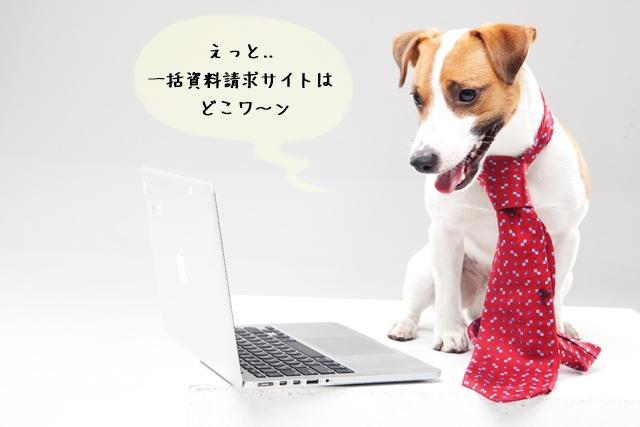 ペット関連の資格情報は多い!スクールの無料資料請求を活用!