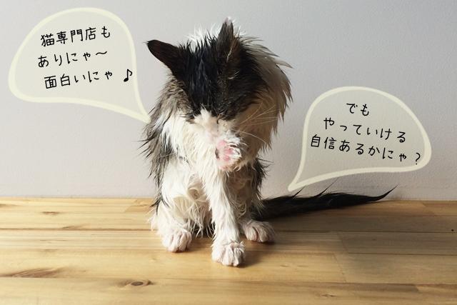 猫専門の美容師になれる?