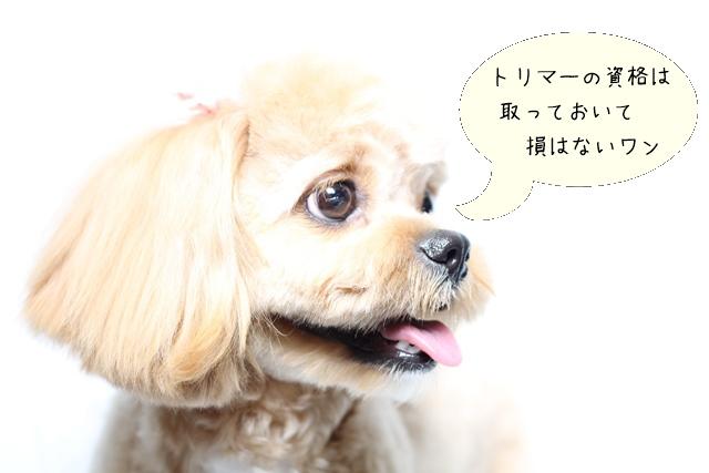 犬の美容師になる方法