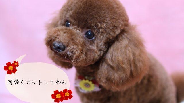 ペット美容師になって仕事したい!